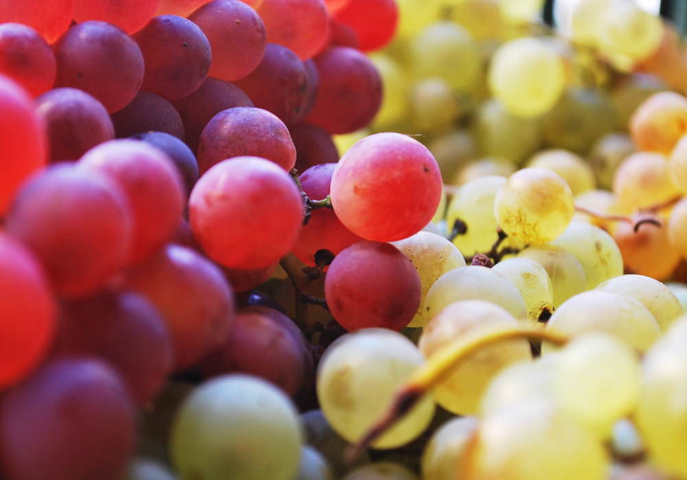 Wine grapes variety